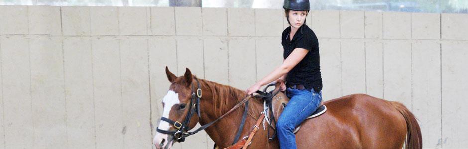 banner-horsetraining