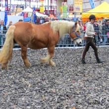 horsetraining-c